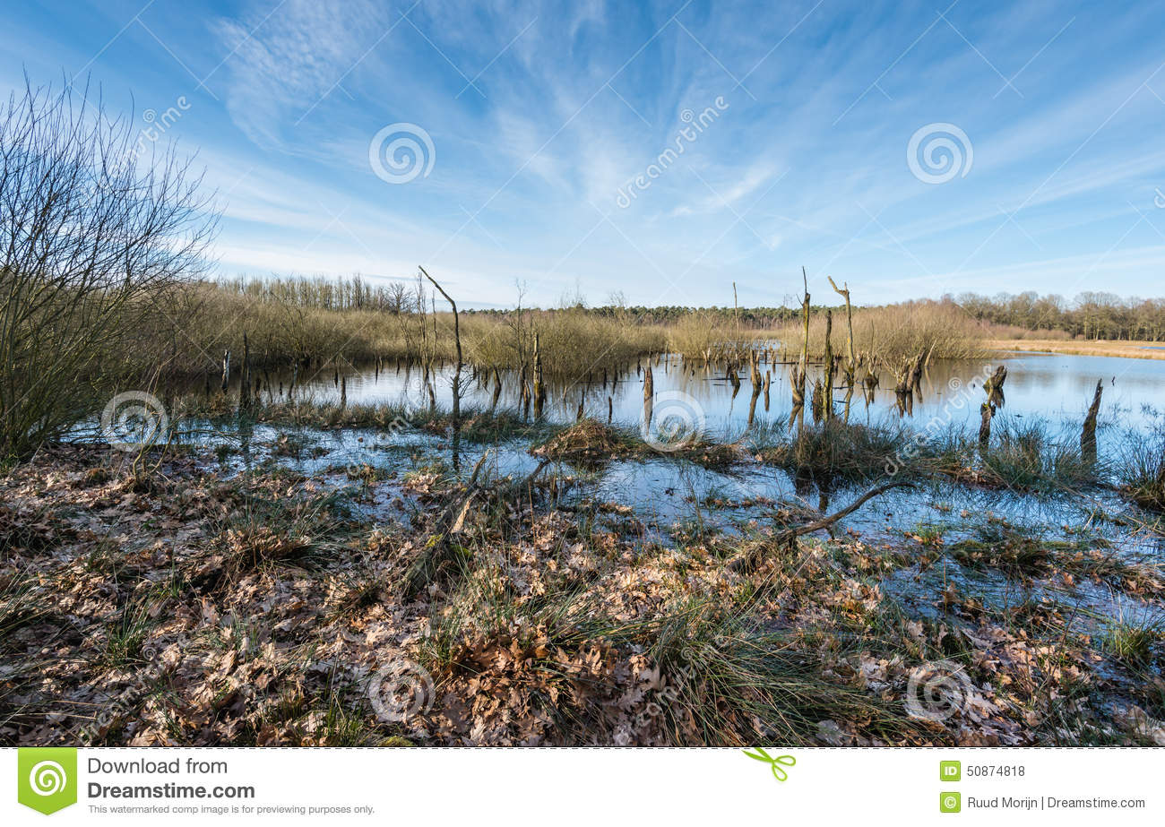 Half Decayed Trees In A Marshy Area In Wintertime Stock Photo.