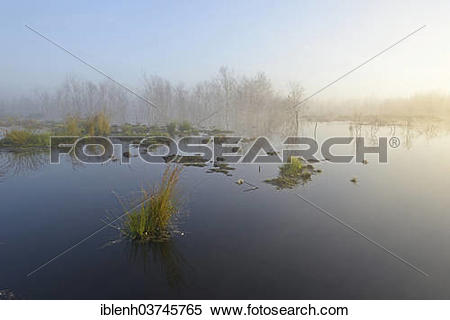 "Stock Image of ""Early morning in a swamp or a moor, Theikenmeer."