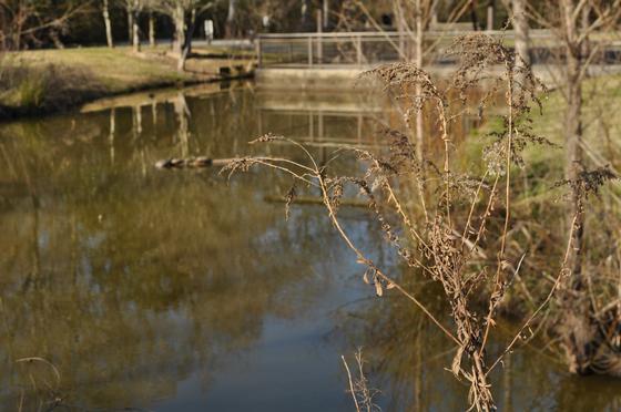 Bluebonnet Swamp Nature Center.
