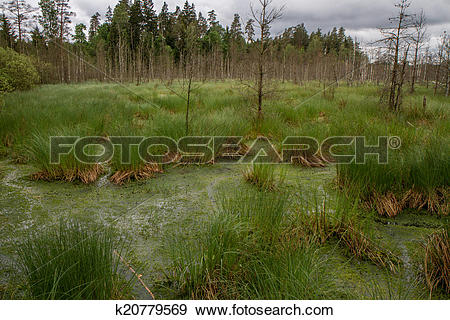 Stock Illustration of swamp k20779569.