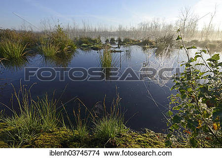 "Stock Photo of ""Early morning in a swamp or a moor, Theikenmeer."