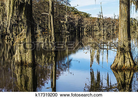 Stock Photography of Swamp Tree Moss k17319200.