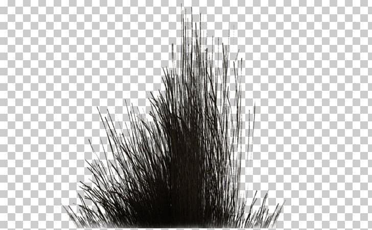 Vegetation Swamp Grasses PNG, Clipart, Art, Artist, Black.