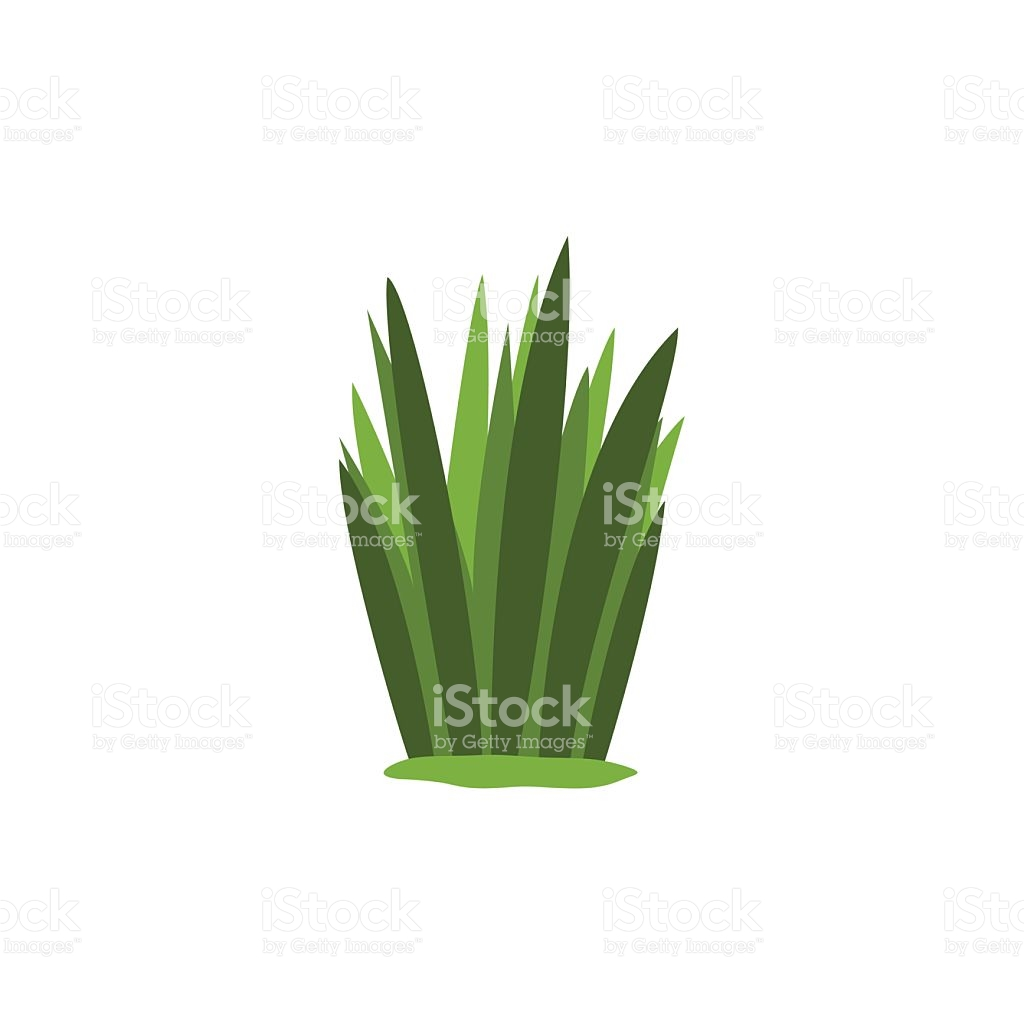 Green Swamp Sedge Weed Isolated Element Of Forest stock vector art.