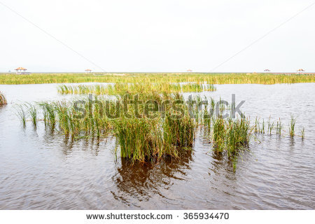 Swamp Grass Stock Photos, Royalty.