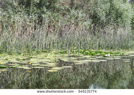 Sedges Stock Photos, Royalty.