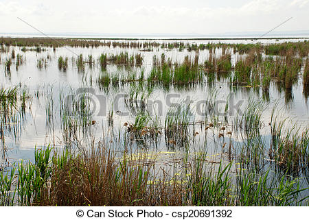 Stock Photographs of Swampy area with grass and sedge, Ukraine.
