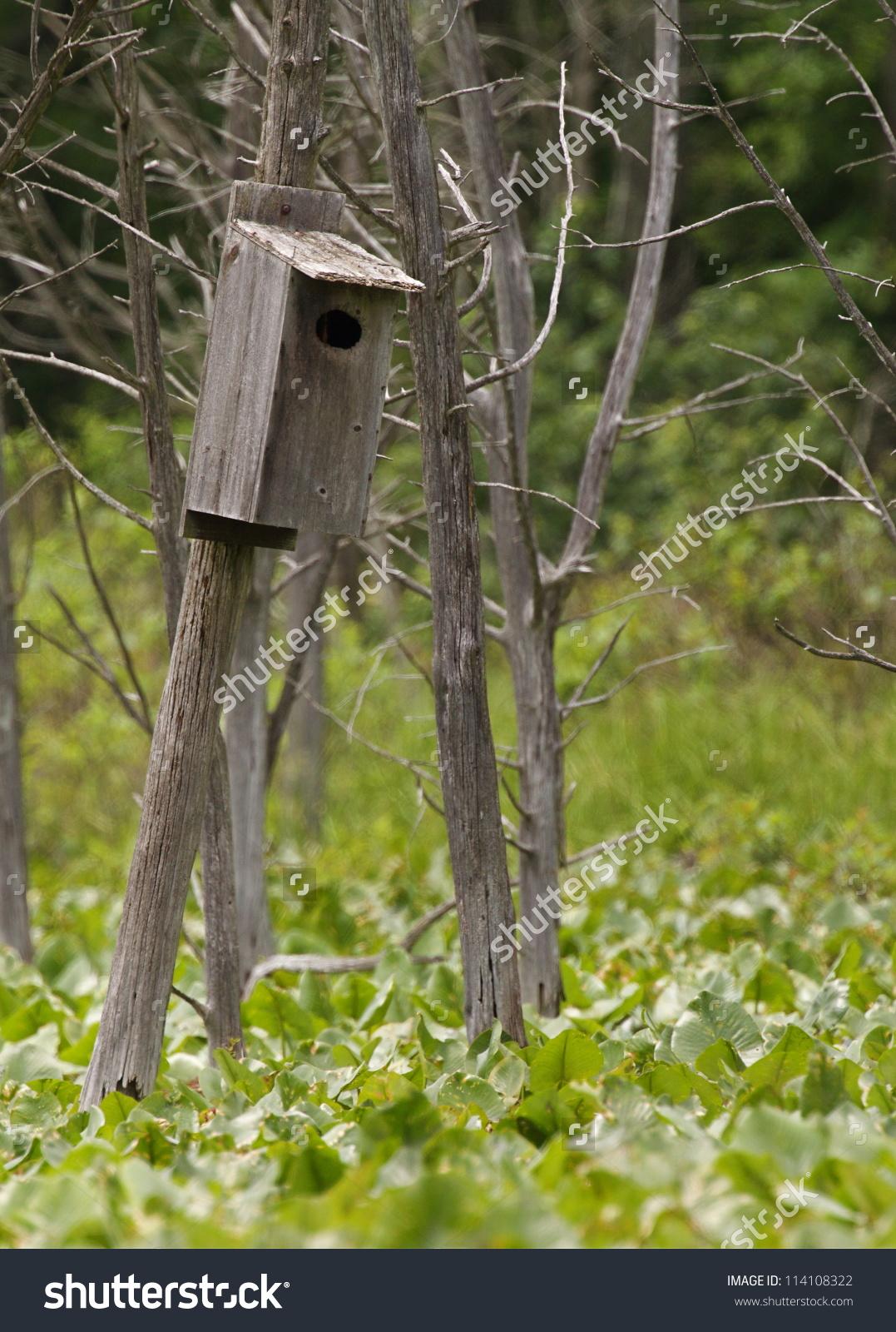Wood Duck Nest Box Bird House Stock Photo 114108322.