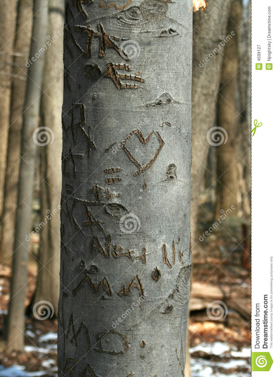 Carved Sweetheart Tree In The Woods Royalty Free Stock Photography.