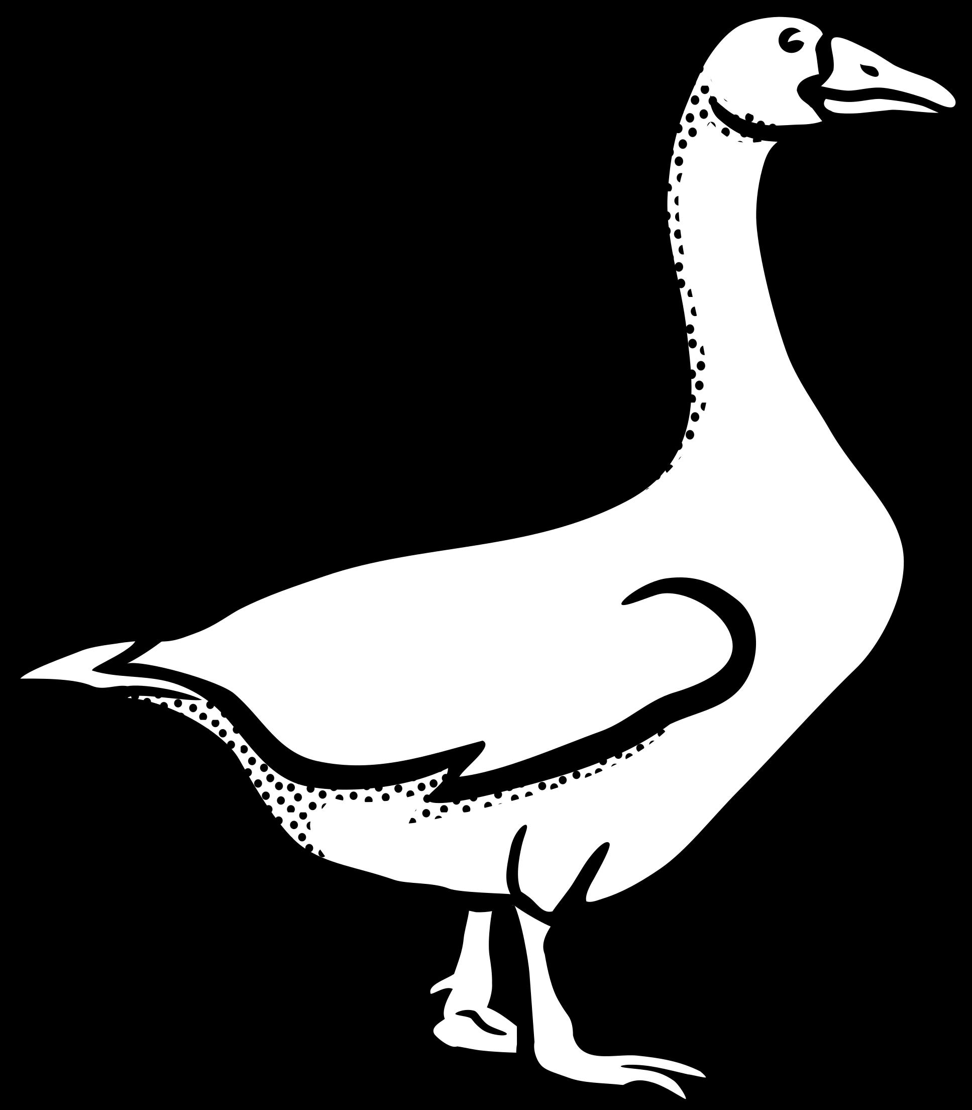 Canada Goose Mute Swan Bird Vertebrate.