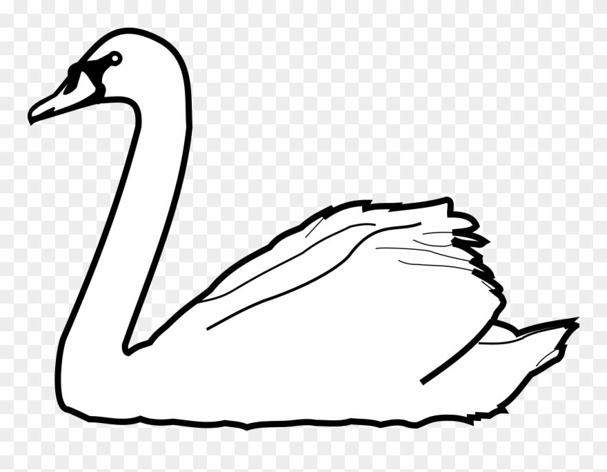Swans Drawing At Getdrawings.