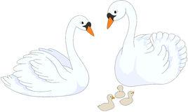 Graceful White Swan Blue Lake Stock Illustrations.