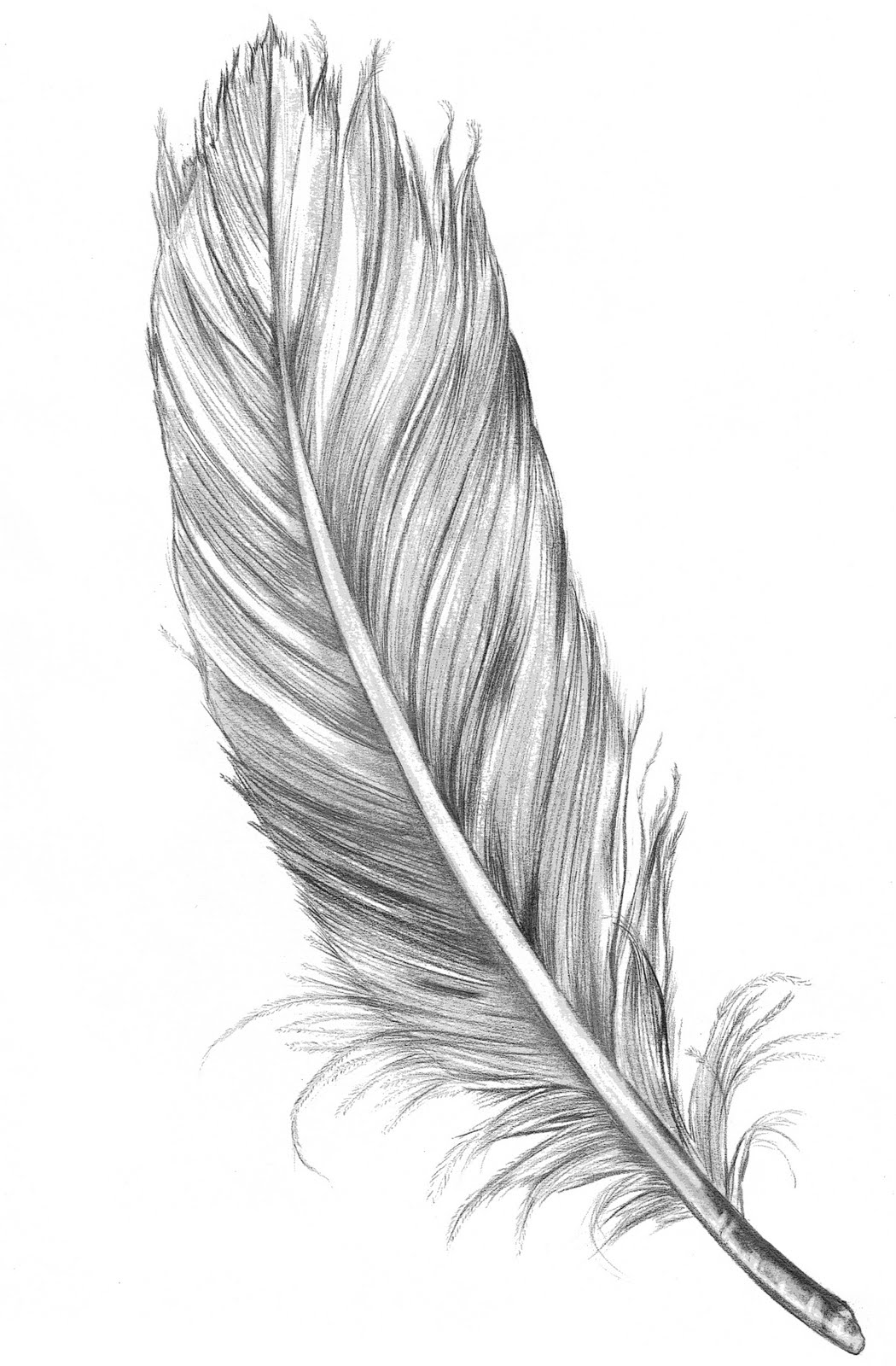 Floating Feather Bird Clipart.