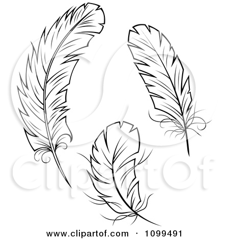 Three feather clipart.