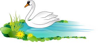 Swan Stock Illustrations.