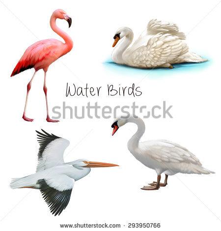 Flamingo Isolated On White Background Stock Illustration 187286099.