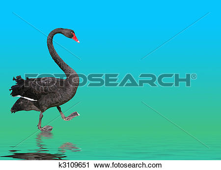 Clipart of Black Swan Steps Out k3109651.