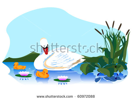 Baby Swans Stock Vectors, Images & Vector Art.