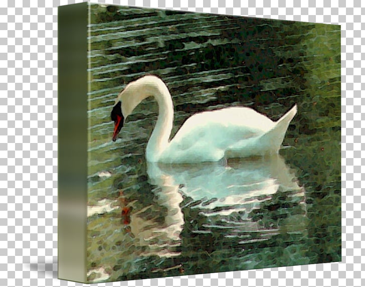 Cygnini Fauna Pond Beak, watercolor swan PNG clipart.
