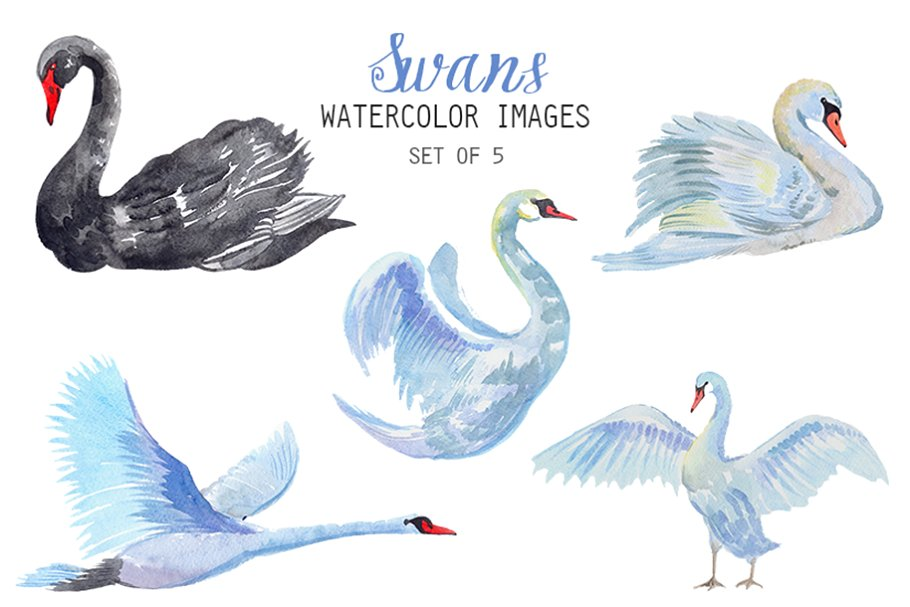 Watercolor Swans Clipart.