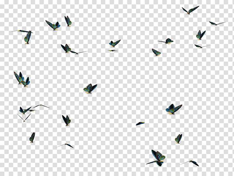 Butterfly Swarm , black and white abstract transparent.