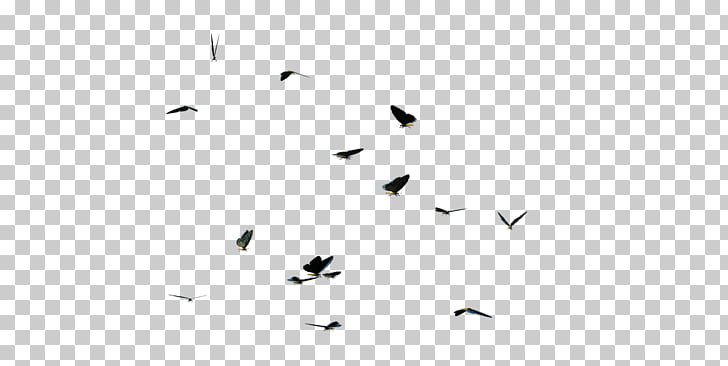 Black and white Line Angle Point, Butterflies Swarm PNG.