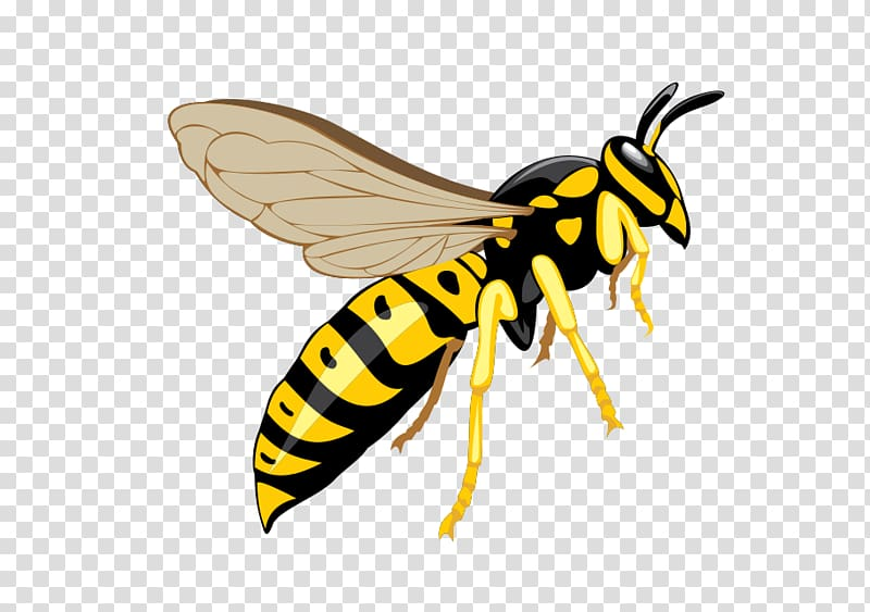 Yellow jacket wasp illustration, Hornet Bee Insect Wasp Pest.