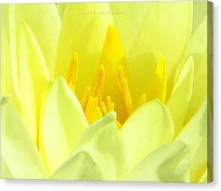 Flower Lotus Spirit Canvas Prints and Flower Lotus Spirit Canvas.