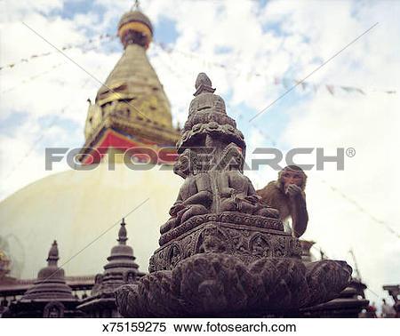Stock Image of Monkey at Swayambhu Temple in Nepal x75159275.