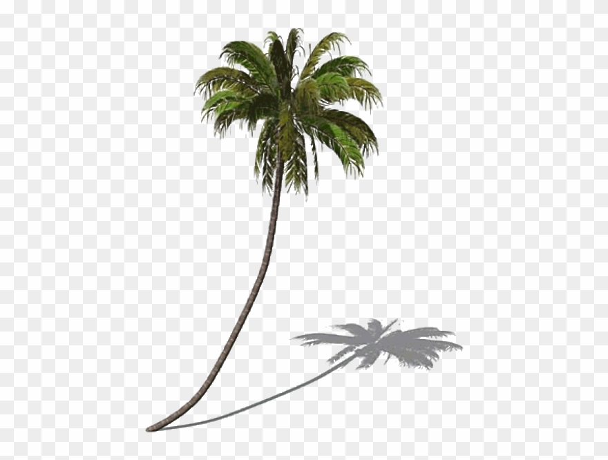 Palm Tree Clipart Swaying.