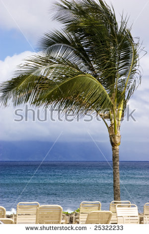 Palm Tree Sways On A Windy Day In The Tropics Stock Photo 25322233.