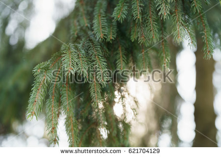 Tree Swaying Stock Images, Royalty.