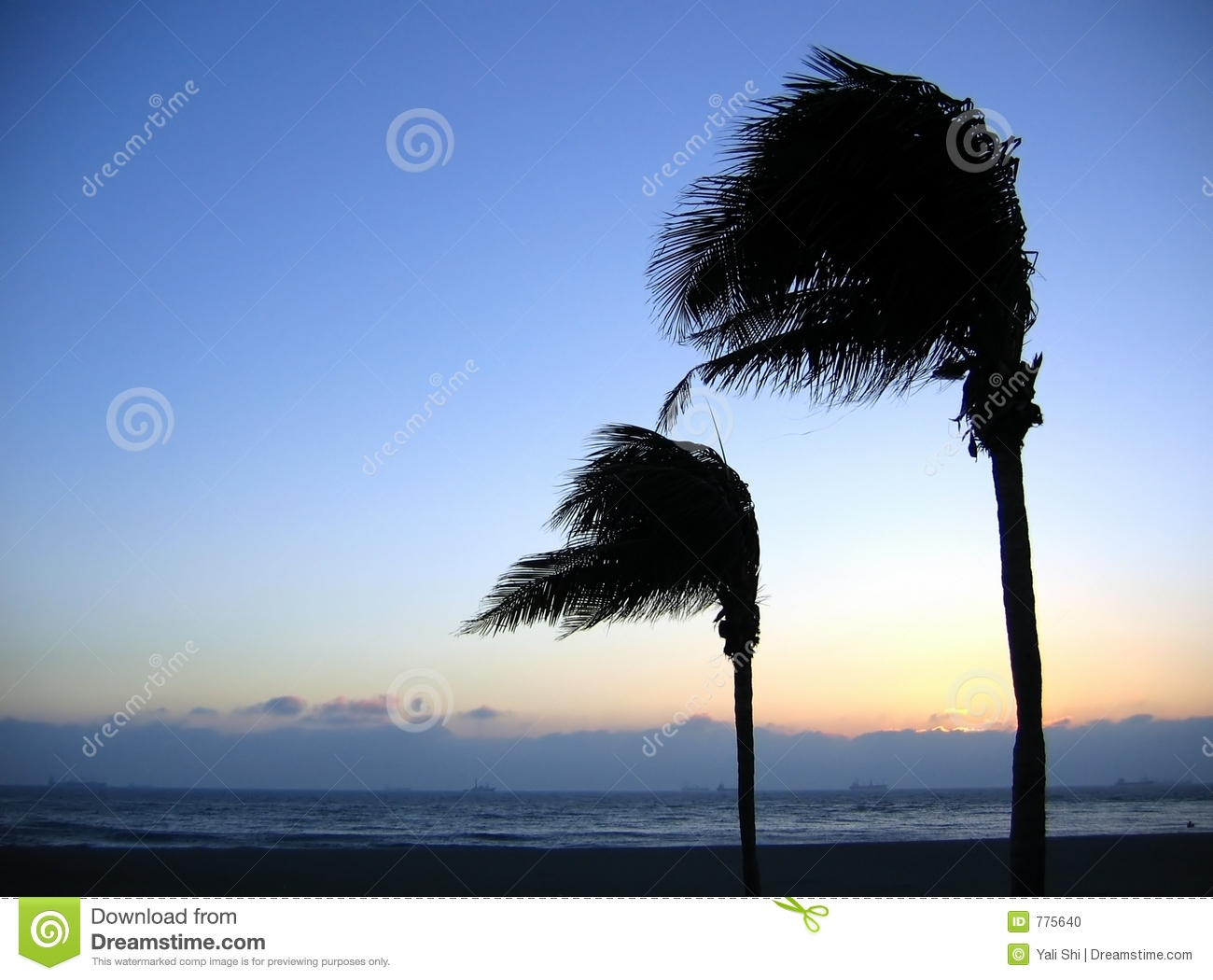 Trees Swaying In The Breeze Royalty Free Stock Images.