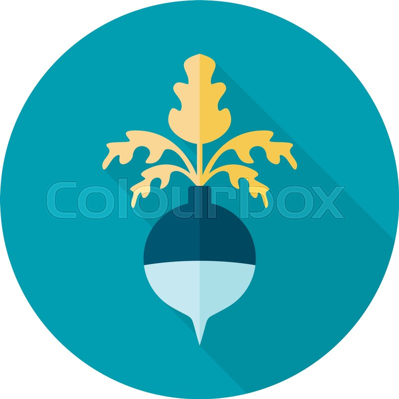 Rutabaga or Swede flat icon. Vegetable root vector illustration.