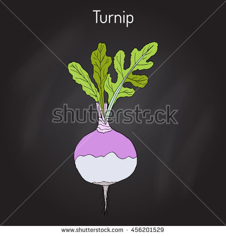 Rutabaga Stock Photos, Royalty.