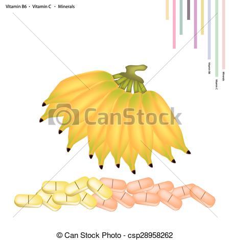 Clip Art Vector of Sweet Banana with Vitamin B6 and Vitamin C.