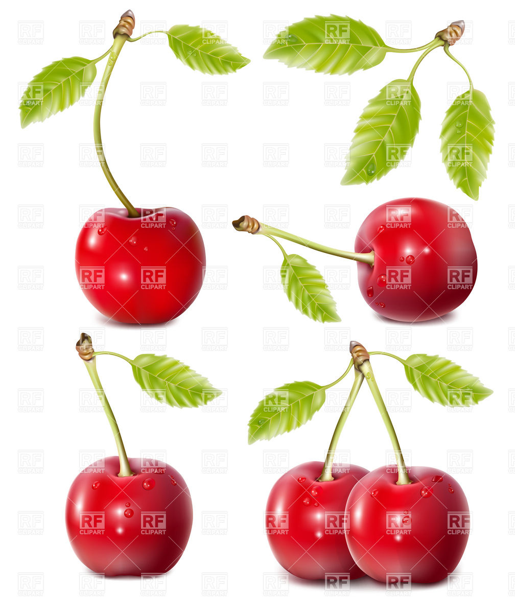 Sweet cherries with leaves Vector Image #5240.
