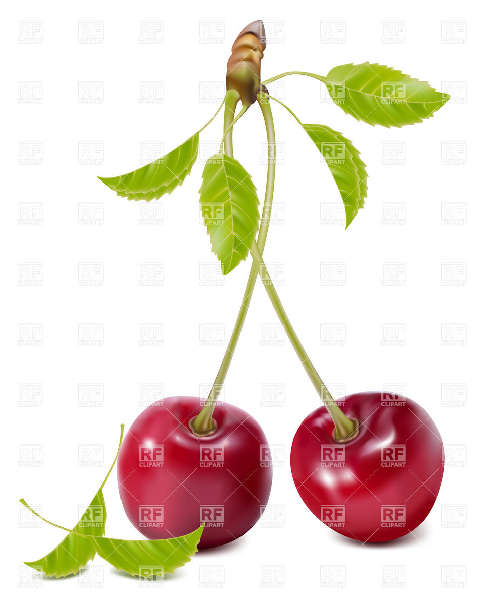 Sweet Cherries with leaves Vector Image #5011.