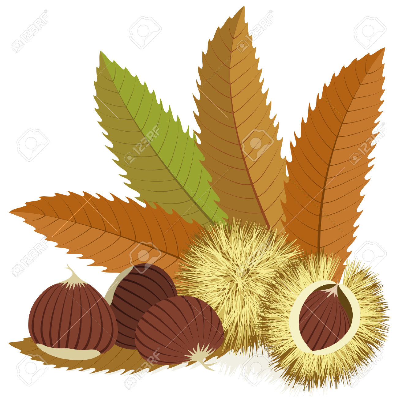 Sweet Chestnuts With Leaves And Spiny Husks On White Background.