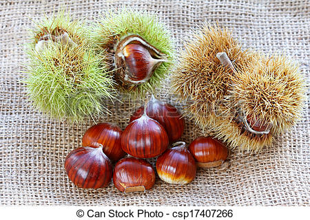 Stock Image of Spanish chestnuts (Sweet chestnuts).
