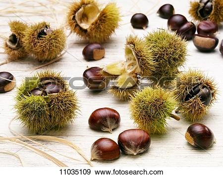 Stock Photograph of Sweet chestnuts, with and without prickly case.