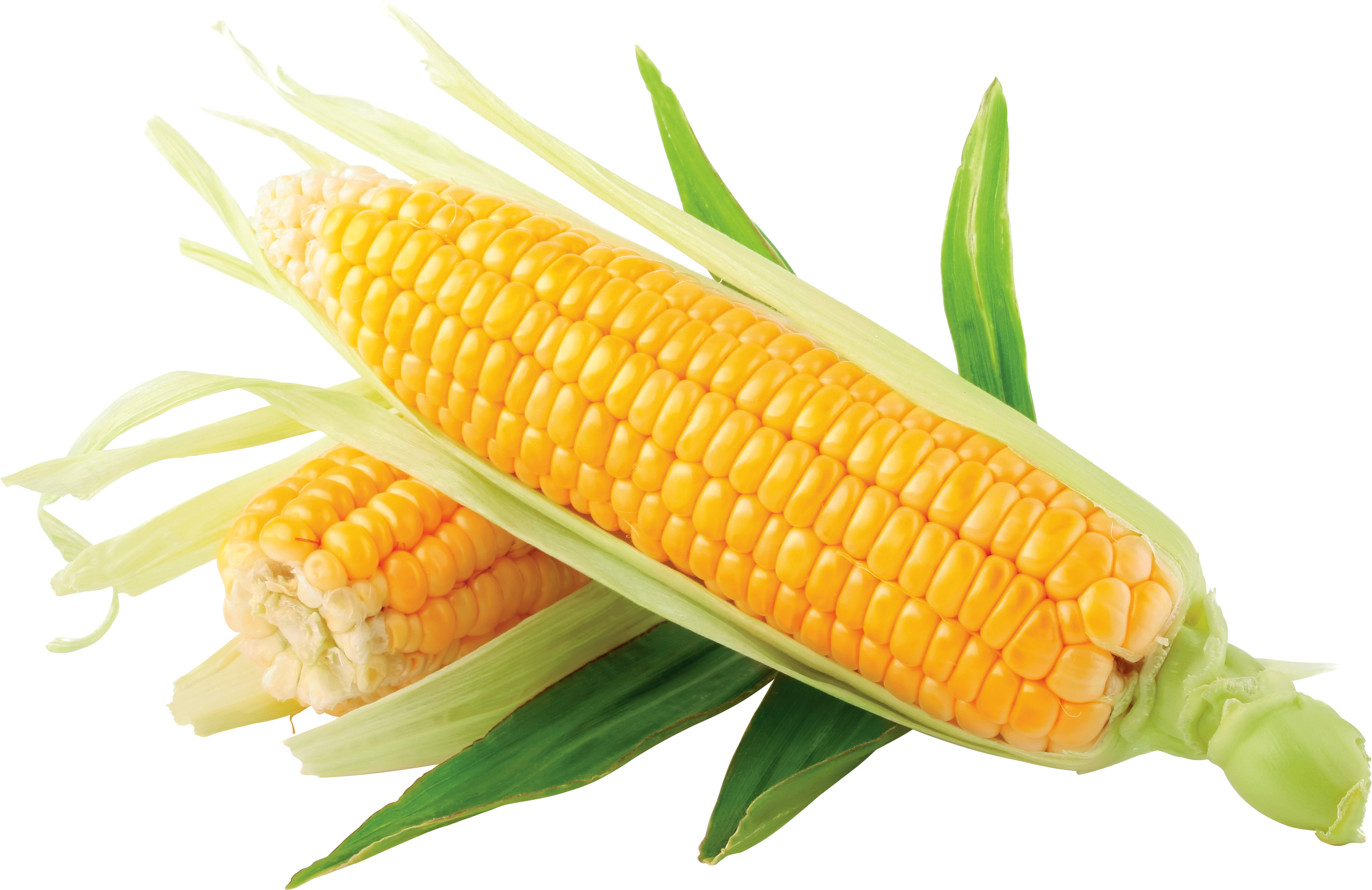 Free sweet corn clipart clip art image 9 of image.