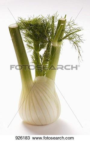 Stock Photo of Fresh fennel 926183.