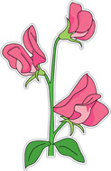 Sweet Pea Clipart.