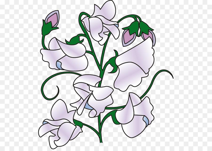 Sweet Pea Flower png download.