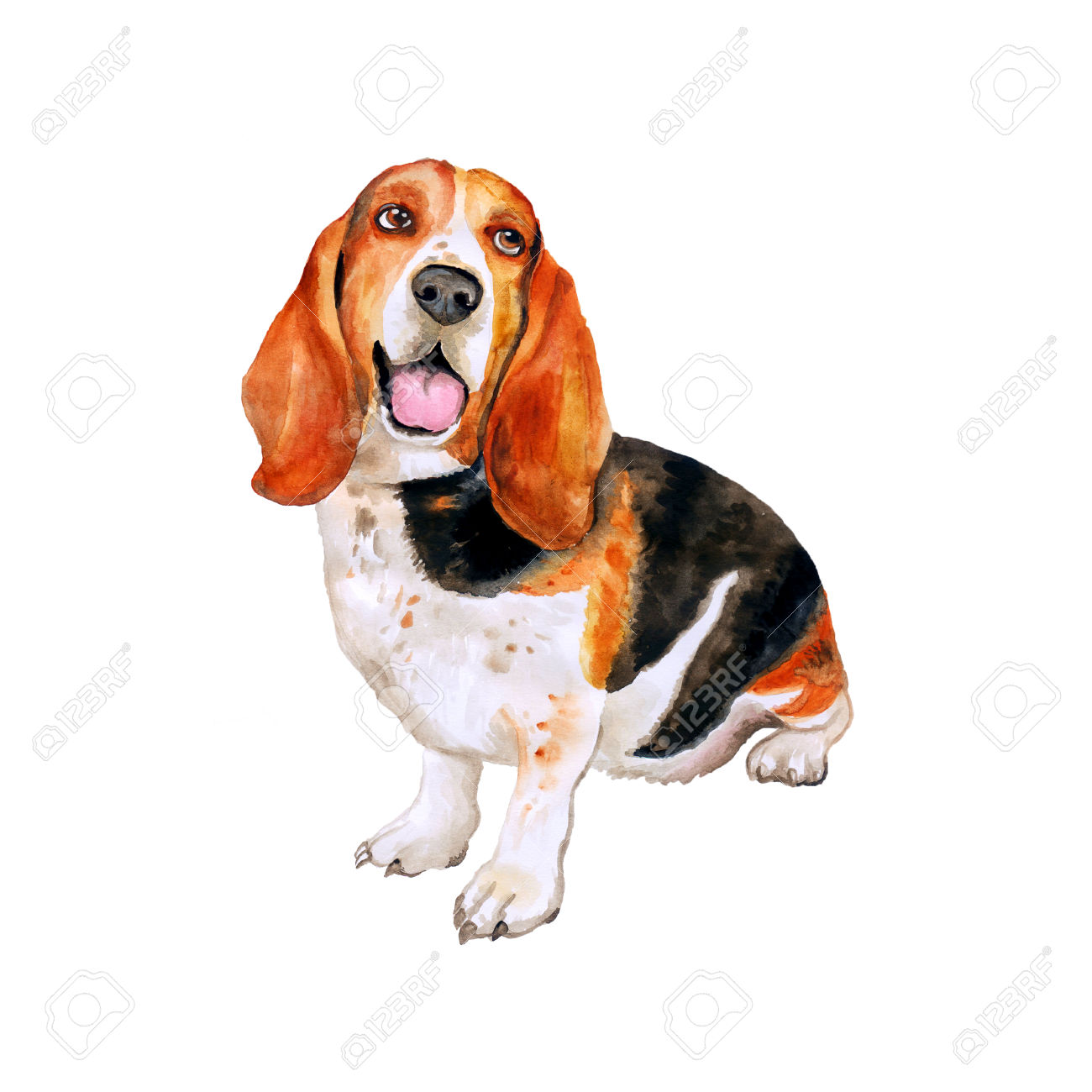 Watercolor Portrait Of French, English Or British Basset Hound.