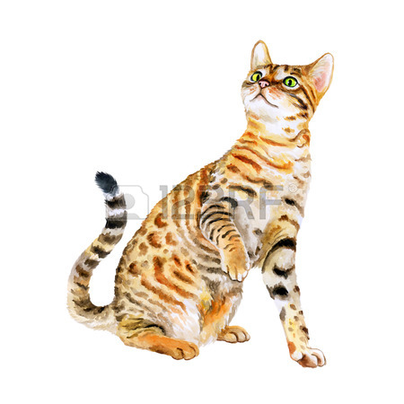Watercolor Portrait Of American Savannah Cat Isolated On White.