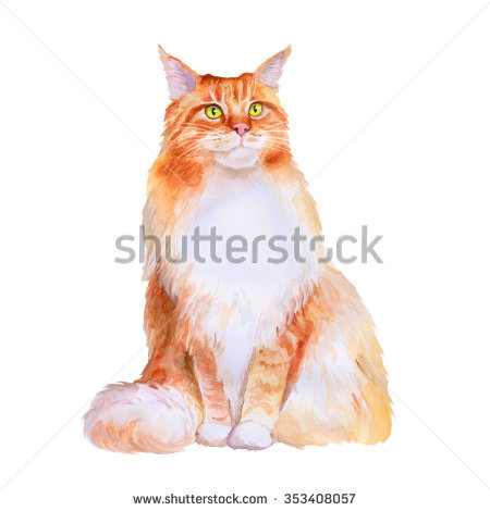 Watercolor Portrait Of Red Maine Coon Long Hair Cat Isolated On.