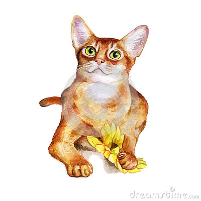 Watercolor Portrait Of Abyssinian Cute Cat On White Background.