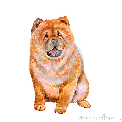 Watercolor Portrait Of Red Chinese Chow Chow Breed Dog On White.